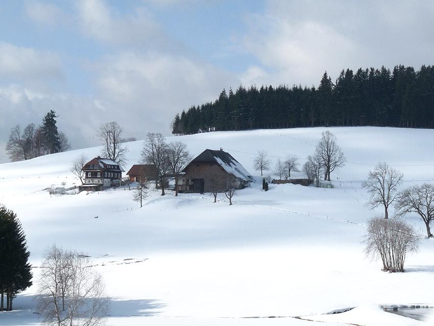 היער השחור בחורף