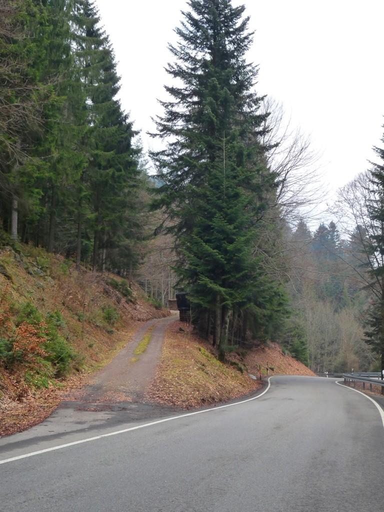 מסלול טיול של 7 ימים ביער השחור