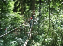 פארקי חבלים ומגלשות הרים ביער השחור