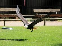 פארק הציפורים והקופים Vogelpark Steinen
