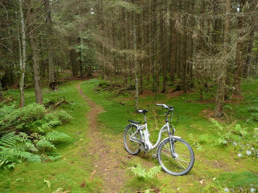 טיול אופניים ביער השחור