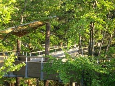 שביל צמרות העצים בואלדקירש